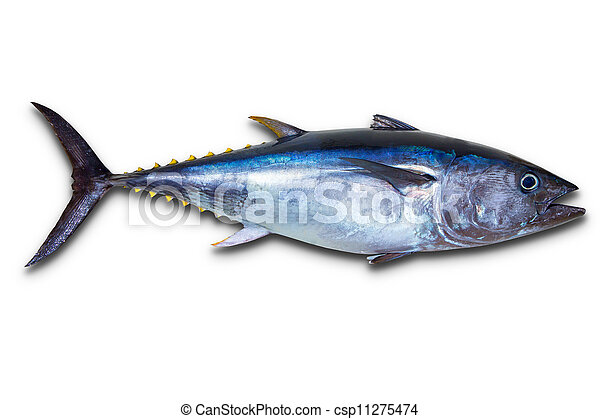 Bluefin tuna really fresh isolated on white - csp11275474