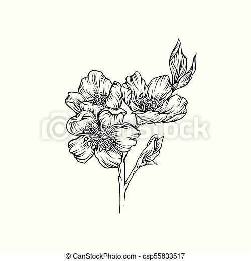 Blume Gezeichnet Zweig Abbildung Hand Vektor Design Blühen