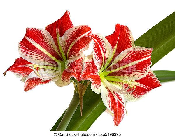 Blume, rotes gelb, stempel. Foto, blume, makro, tief,... Stockbilder ...
