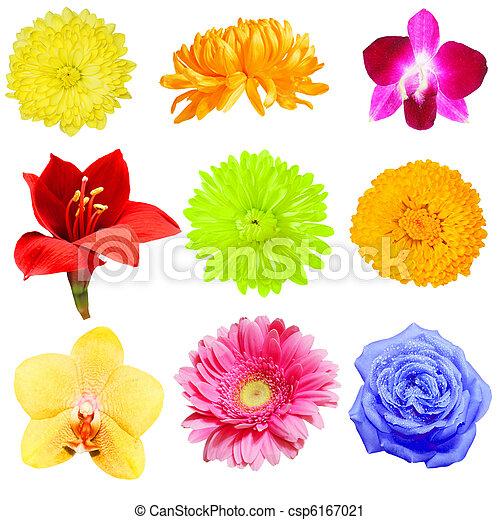 Blumensammlung - csp6167021