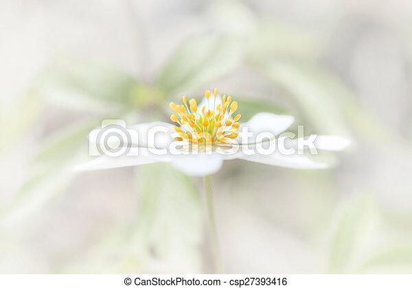 Blume, sehr, gelber , blütenblätter , helles weiß. Blume, sehr ...