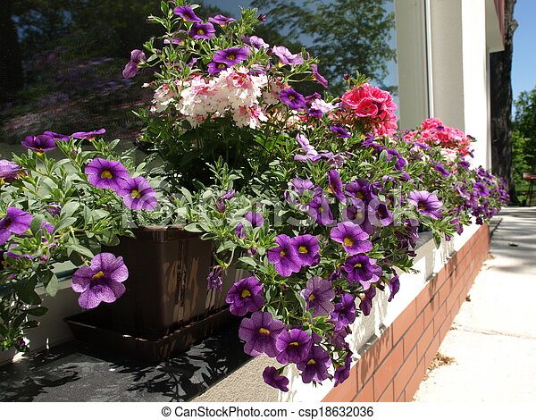 Blumen Fensterbank Topf Blumen Bunte Fensterbank