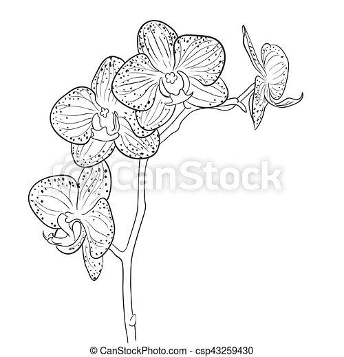 blumen gezeichnet orchidee hand wei es schwarz linie vektoren suche clipart. Black Bedroom Furniture Sets. Home Design Ideas