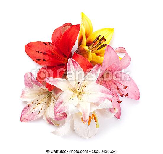 blumen, lilie, bunte - csp50430624