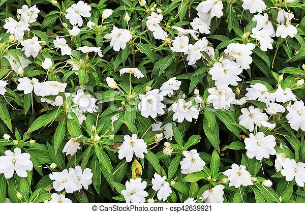 Blumen-, weisse blumen, hintergrund. Sonnig, detail,... Stockfoto ...