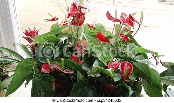 Blumen Für Die Wohnung blumen, wohnung, töpfe, luxus, interior. haus, topf, stock