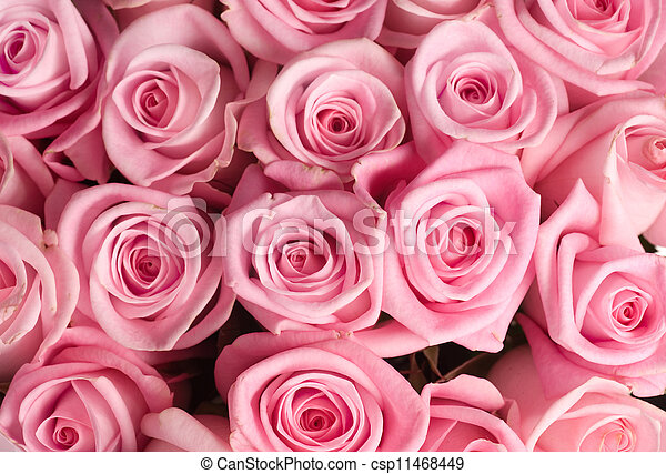 blumengebinde, groß, rosen - csp11468449