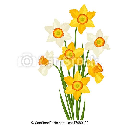 Bouquet von Blumen Narziss auf weißem Hintergrund. - csp17680100