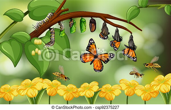 Blured nature background with life cycle of butterfly - csp92375227
