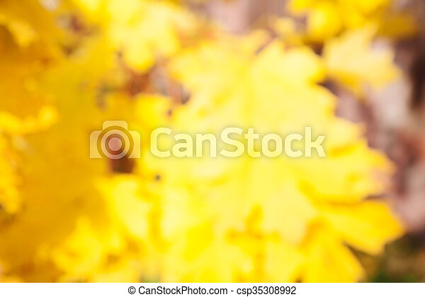 blurred background of autumn yellow leaves - csp35308992