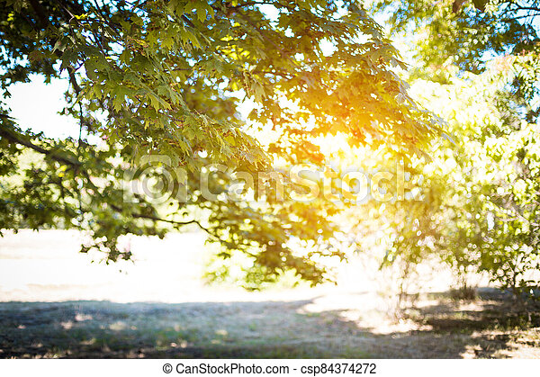 Blurred branches of a tree in the rays of the sun. Summer background - csp84374272