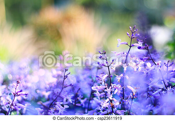 Blurred flowers on sunrise background. - csp23611919