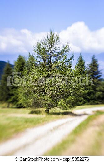 Blurred Mountain Pathway. Lensbaby Shot - csp15852276