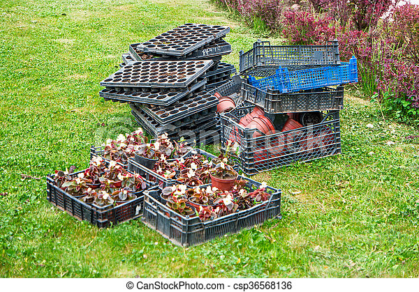 boîte, fleur, disposition, copyspace, gratuite, above., arrière-plan vert, seedlings, herbe - csp36568136
