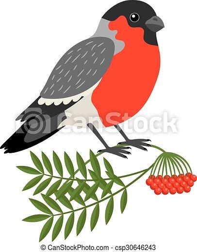 Boże Narodzenie Gil Ptak Bird Góra Wektor Gałąź Jesion Boże