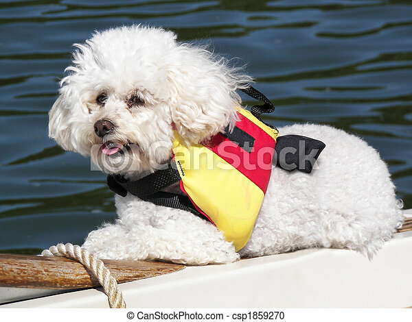Boating Buddy - csp1859270