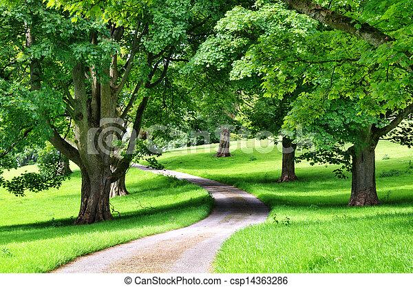 La avenida de los árboles con un camino sinuoso - csp14363286