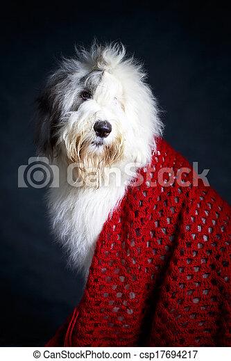 Bobtail dog - csp17694217