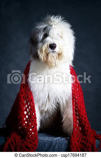 Bobtail dog - csp17694187