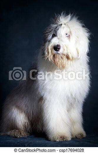 Bobtail dog - csp17694028