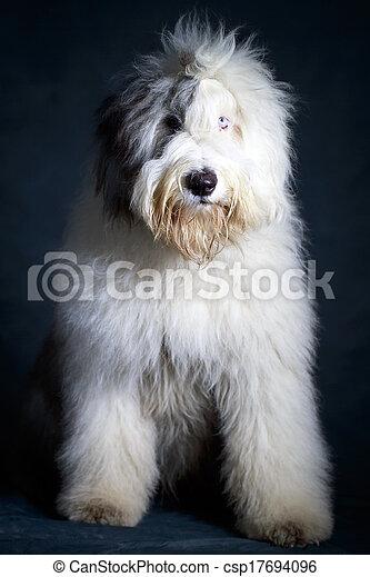 Bobtail dog - csp17694096