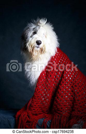 Bobtail dog - csp17694238