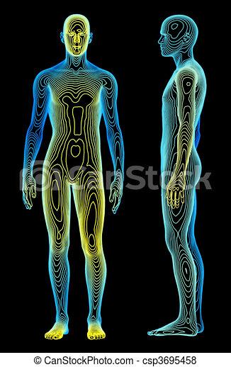 Body Analysis - csp3695458