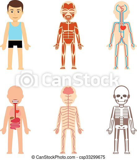 Body anatomy vector body anatomy vector illustration skeletal and body anatomy vector ccuart Images