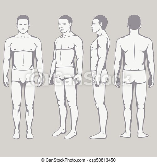 Human body anatomy, vector man front back side.