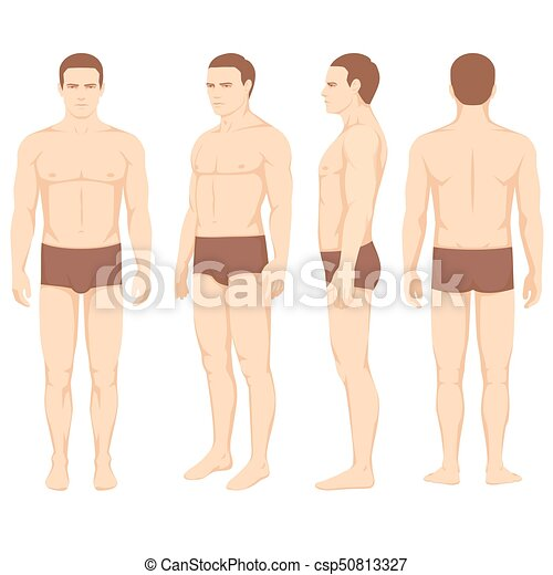 Human body anatomy vector man front back side body anatomy vector man front back side ccuart Images