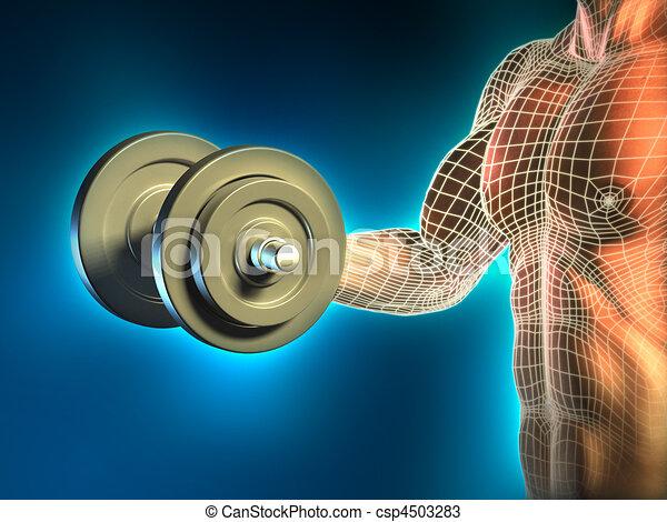 Body building - csp4503283
