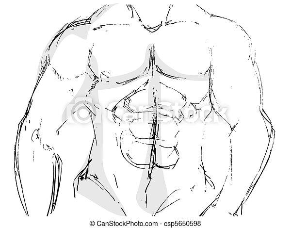 body building  - csp5650598