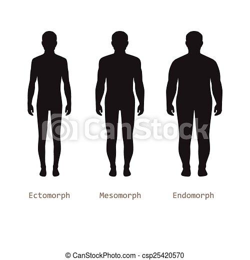 body male types,  - csp25420570