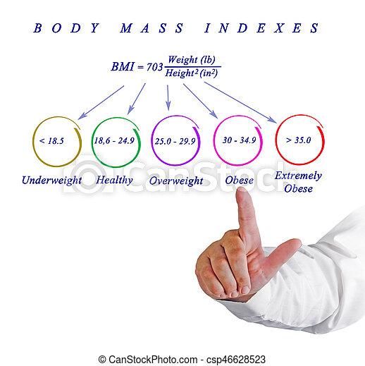 Body Max Index - csp46628523