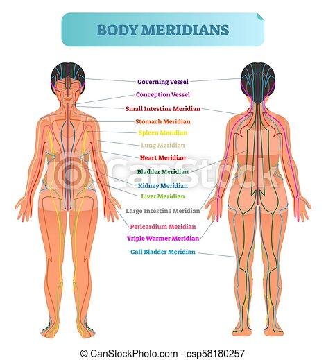 Body Meridian System Vector Illustration Scheme Chinese Energy