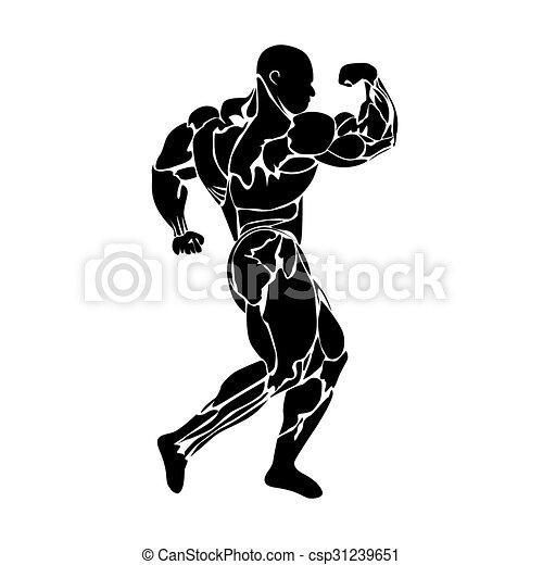 Bodybuilder muskeln koerperbau freigestellt Illustrationen und Clip ...