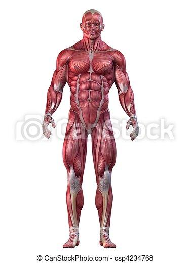 bodybuilder, pose - csp4234768
