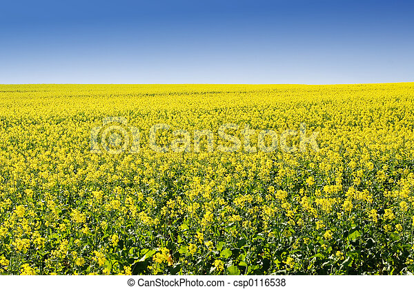 boerderij, #5 - csp0116538