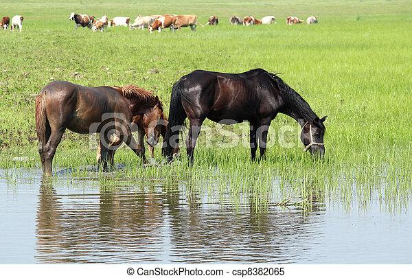 boerderij, animlas - csp8382065
