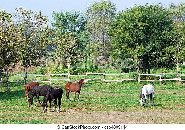 boerderij, paarden - csp4803114