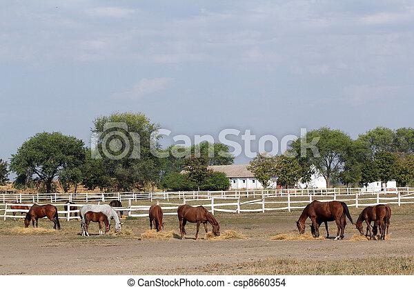 boerderij, paarden - csp8660354