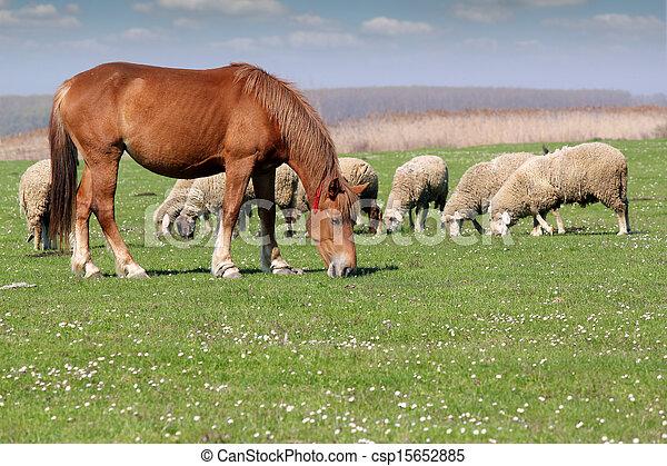 boerderij, schaap, paarde, dieren - csp15652885