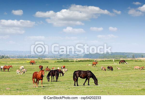 boerderij, seizoen, wei, dieren, lente - csp54202233