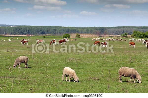 boerderij, wei, dieren - csp9398190