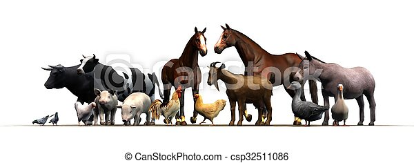 boerderijdieren - csp32511086