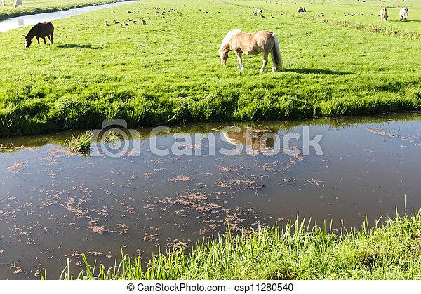 boerderijdieren - csp11280540