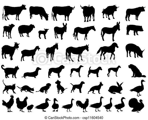 boerderijdieren - csp11604540