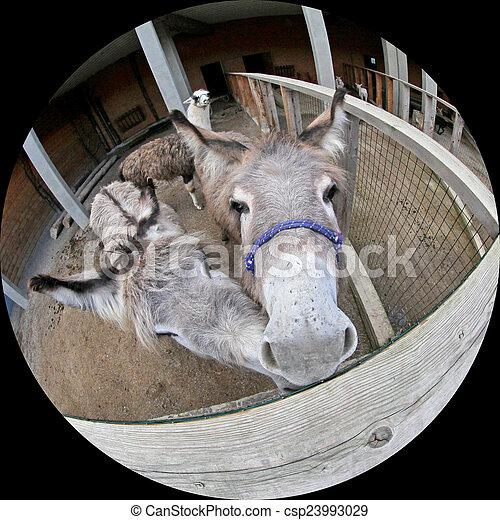 boerderijdieren - csp23993029