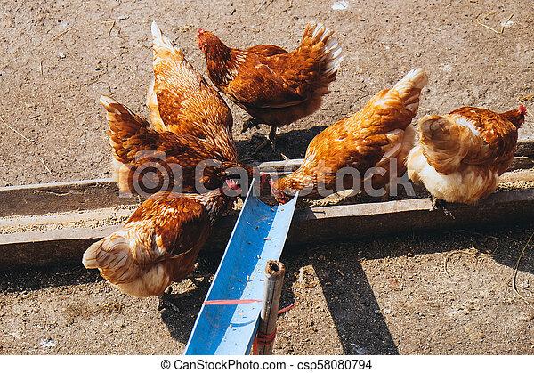 boerderijdieren - csp58080794