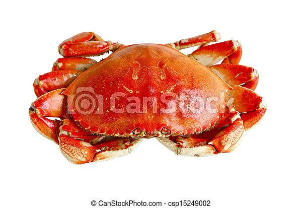 Boiled Crab - csp15249002